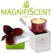 bougie parfumée Magnifiscent